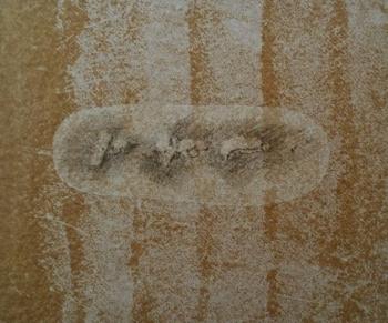 Pre-historic 6 - 2017 - frottage su carta su cellotex - cm 40x47